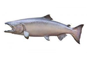 West Coast fishing Charters